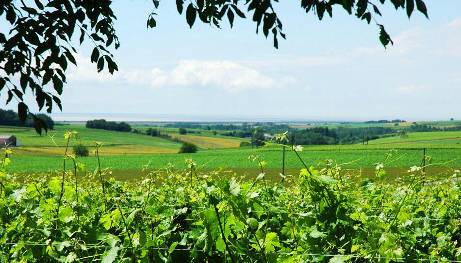 photo 2 du vignoble