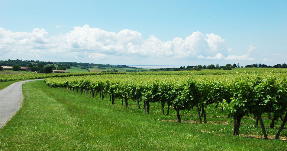 photo 3 du vignoble