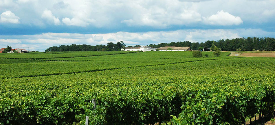 photo 6 du vignoble